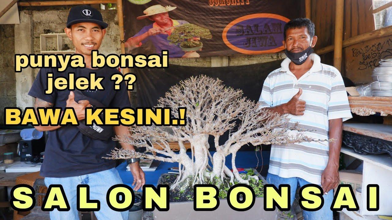 Salon Bonsai Di Bali