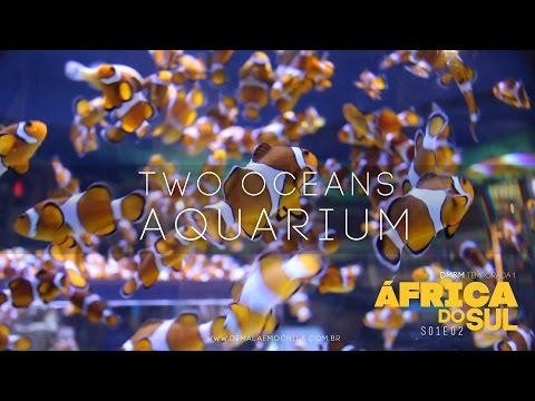 DM&M Travel Show - S01E02 - Two Oceans Aquarium - ÁFRICA DO SUL