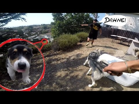 [1.7k$ Hunt] Lost Corgi Puppy REUNITED With Owner | CRYING Husky Falls In Love