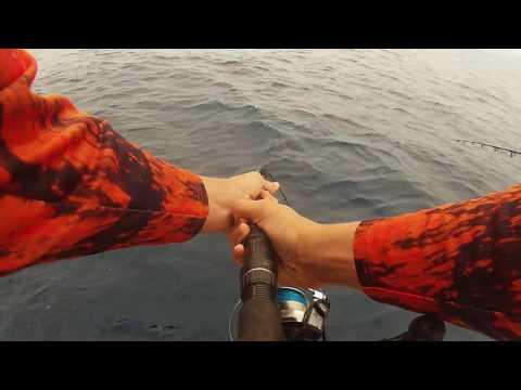 Reef Fishing 2016 Fishing Batman Reef Port Douglas