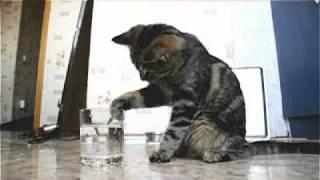 Кошка и стакан)))