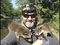 Incredible Baby Racoon Experience