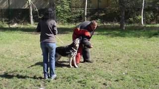 Вео Алия (Вео Виват Шахиня). Давление на собаку.