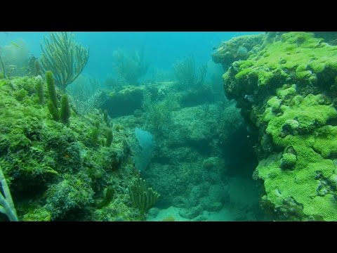 Coral Reef-THE MOVIE-SCUBA Dive (Fort Lauderdale, Florida)