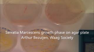 Time lapse of growth phase Serratia Marcescens on agar Plate