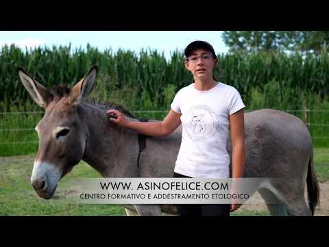 Donkey Educational - Le orecchie dell'asino