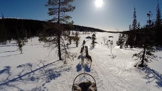 Husky Safari In Riisitunturi National Park, Lapland, Finland