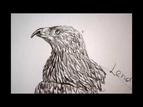 Adler Zeichnen
