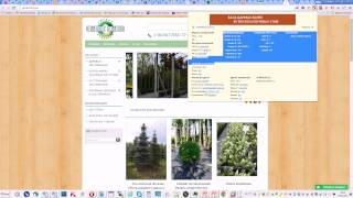 Видеоурок 1   Быстрый анализ сайта (Курс SEO-оптимизации сайтов)