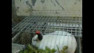 Калифорнийский кролик. Фильм №6. Подкормка витаминами ели 004