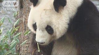 日本政府がジャイアントパンダの貸与とトキの提供を中国側に要請してい...