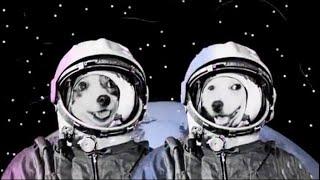 День космонавтики. Белка и Стрелка