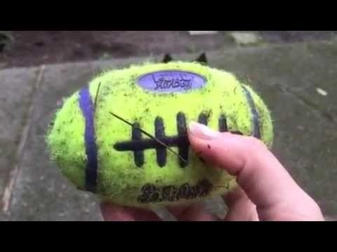 Bama Plays Fetch with the Kong Air Dog Football Squeaky Toy