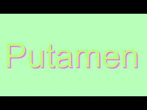 How to Pronounce Putamen