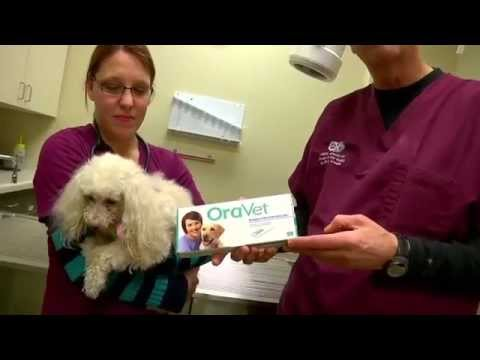 Milwaukee Emergency Center for Animals Reality TV - 17 - air date 3/14/2015