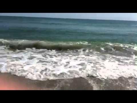 Bull Sharks At Emerald Isle Nc Doovi