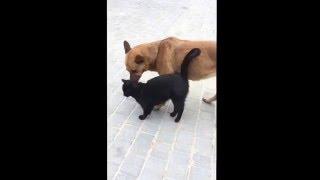 Безумная любовь собаки и кошки...)