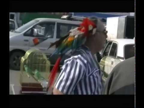ВЫСТАВКА ПТИЦ.АЛМАЗ.РОСТОВ-на-ДОНУ.12.05.2013.часть 2-попугаи и голуби.