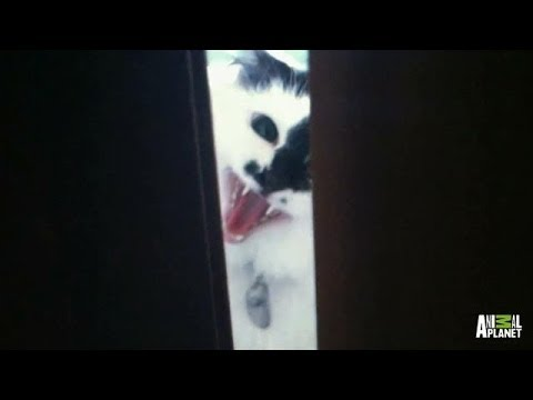 Lux the 911 Cat | My Cat From Hell