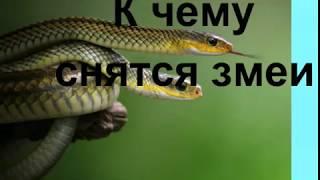 Сон, в котором мужчину или женщину очень болезненно укусила змея, означает, что наяву возникнут проблемы со здоровьем.
