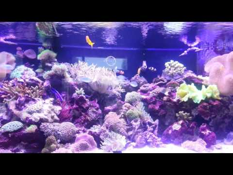 Aquarium at Tanks A Lot West Palm Beach FL