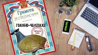 ByterbrodTV - Голубь-черепаха (RiVeRx)