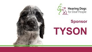 Meet Tyson the hearing dog in training.
