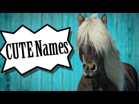 What Should I Name My Horse? | 50 Cute Horse Names