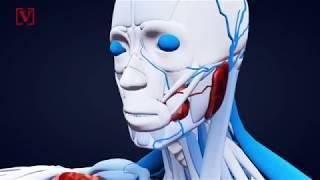 Google hopes AI can predict heart disease by looking at retinas