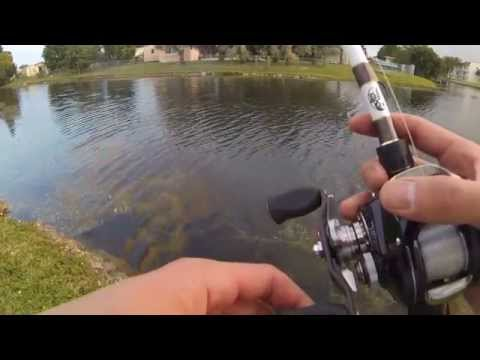 Canal Bass Fishing In FL Florida