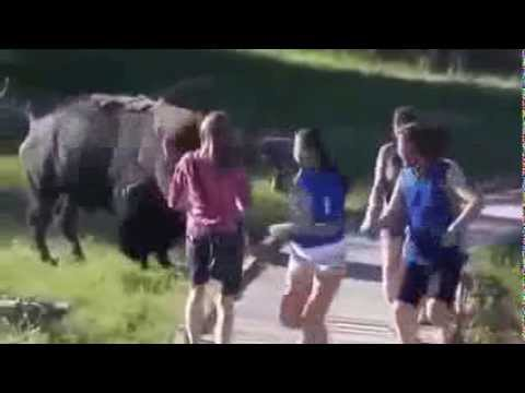 Videos droles attaques animaux