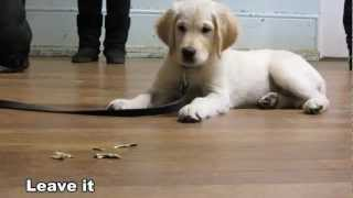 Looking For Dog Training Classes?