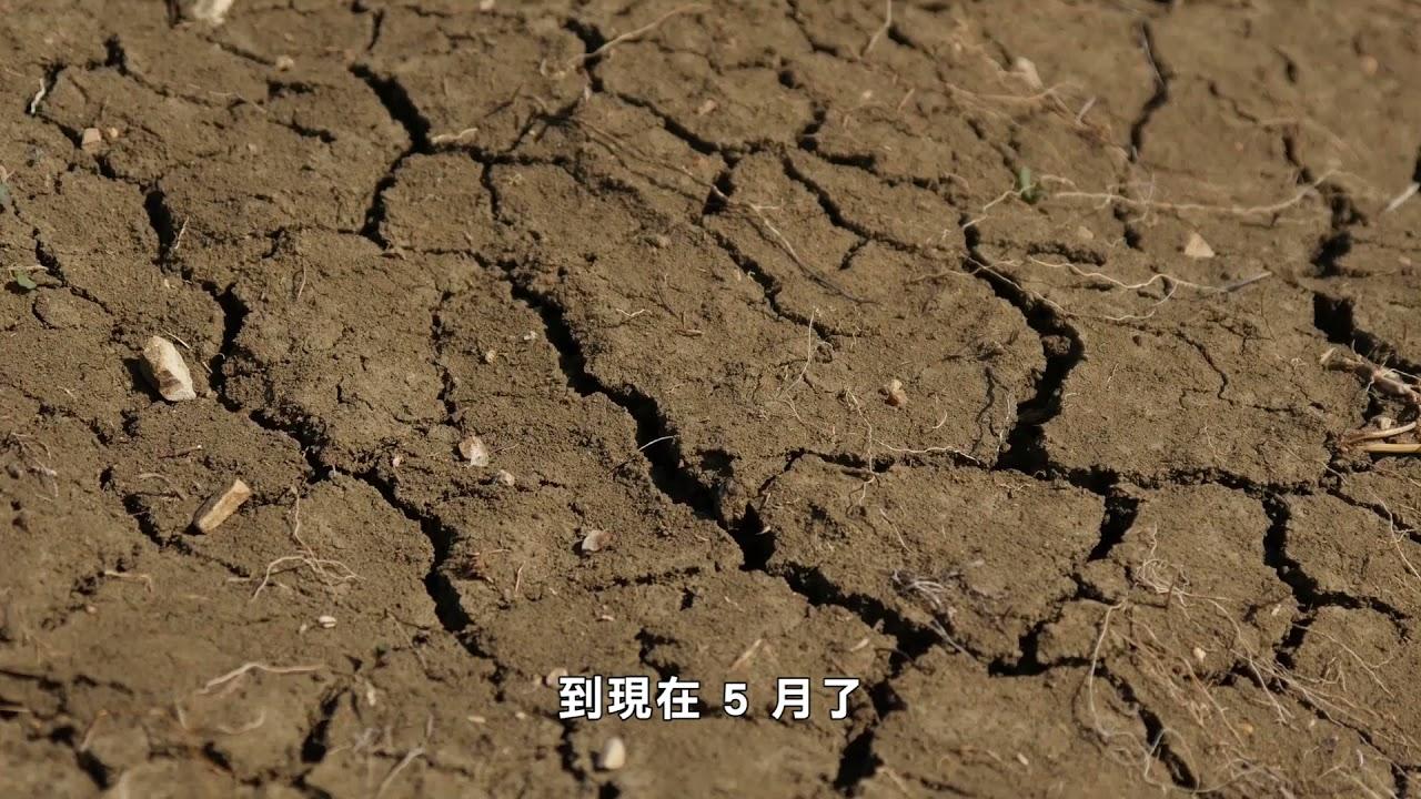 【天下新聞】加州: 應對乾旱天氣  農民減少種植