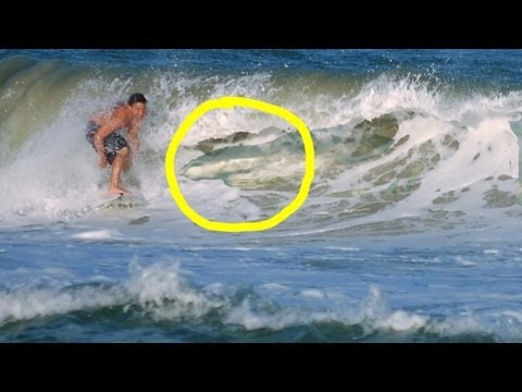 Surfing Shark Infested Waters