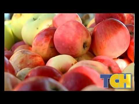Польза яблок для здоровья человека » Ваш доктор Айболит