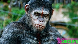 The Planet of The Apes In Real Life