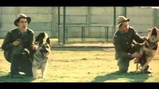 Прикладная дрессировка. Дрессировка пограничных собак СССР 1979