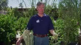 Mojave Desert Native Plants