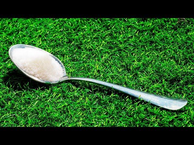 Deja una cuchara con azúcar en tu patio, mira lo que ocurre luego