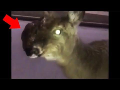 13 Scary Zombie Deer Videos