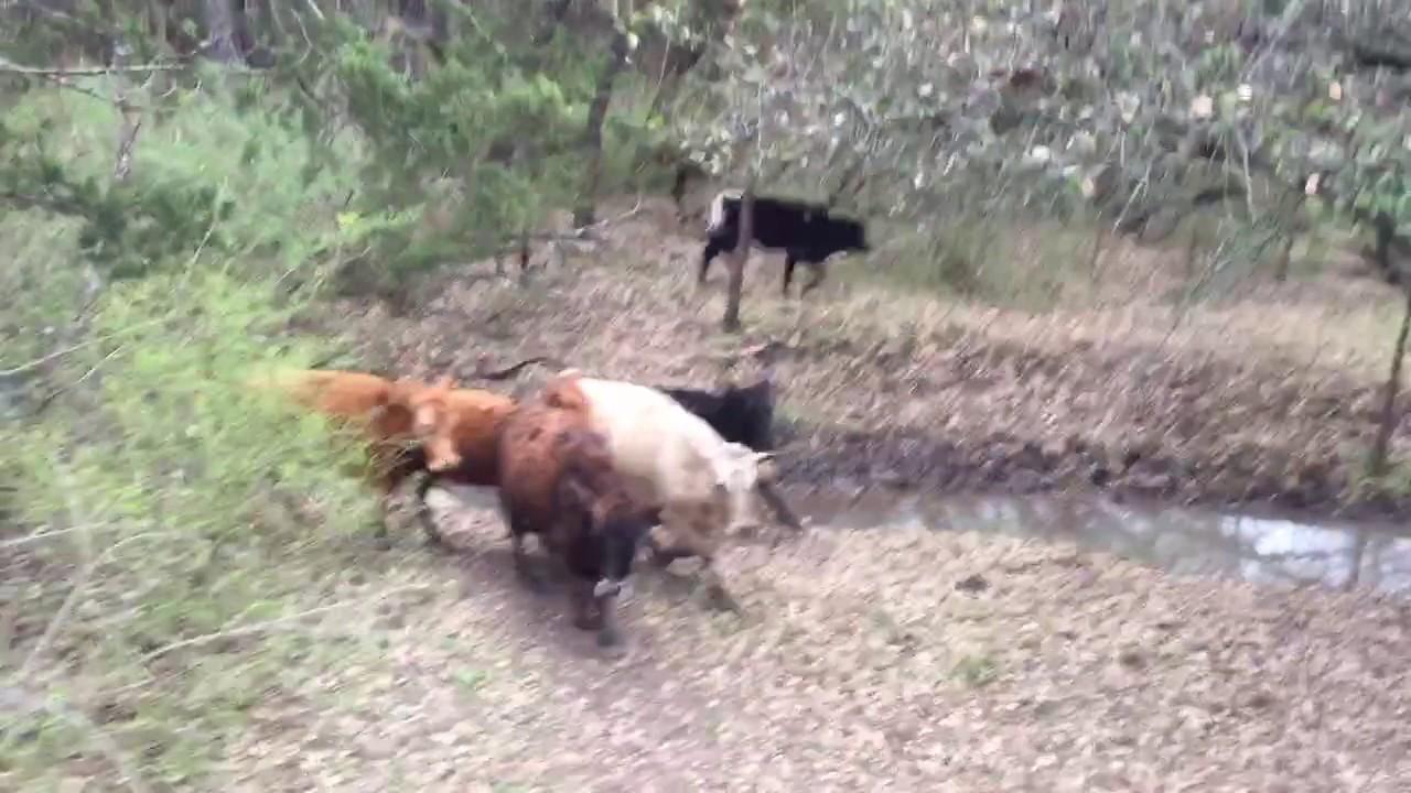 Jessi And Cajun Hangin Tree Cowdogs Youtube