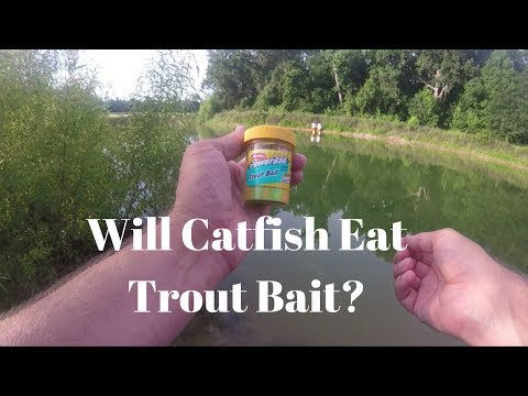 Catfish Fishing With TROUT BAIT?