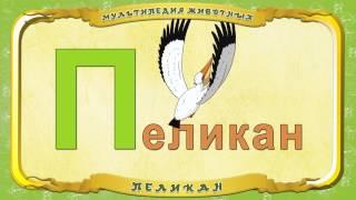 Мультипедия животных  Буква П - Пеликан