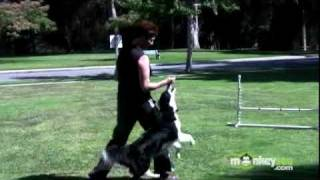 Dog Agility - Training Your Dog To Stay At The Start Line