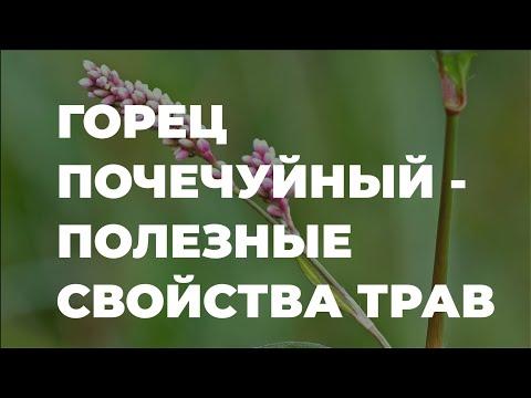 Горец почечуйный - полезные свойства трав и растений / Захар Травник