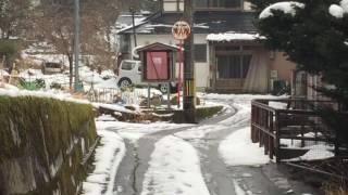 里山にまで餌を求めて猿が降りてきた 石川県白山市.