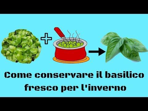 Come Conservare Il Basilico Fresco Per Linverno Youtube