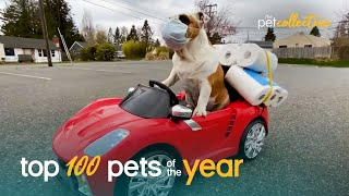 Top 100 Best Pets of the Year (2020)