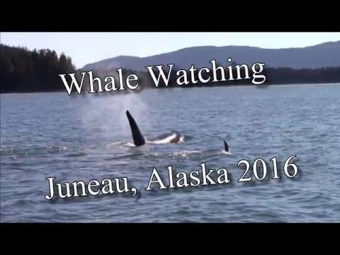 Whale Watching Juneau Alaska 2016