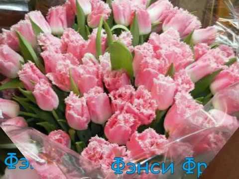 Тюльпаны к 8 марта 2013 г